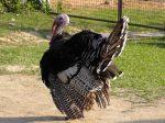 fabianos turkey